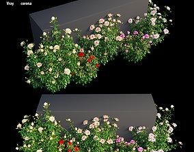 Rose plant set 11 3D