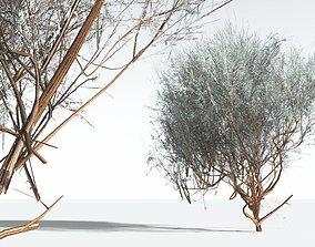 realtime EVERYPlant Big Sagebrush LowPoly 02 --10 Models--