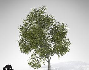 XfrogPlants Japanese Maple 3D model