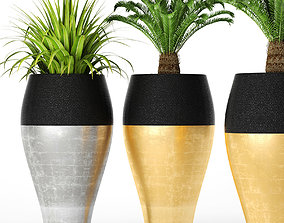 Palm tree Cycas set 3D model