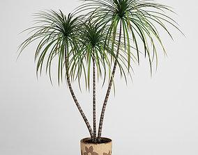 Potted Dracaena Plant 03 3D model