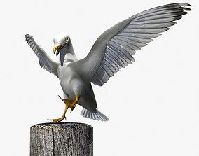 Thayers Herring Gull -rigged - animated 3D model