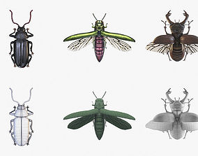 photorealism Collection of Beetles 3D Models