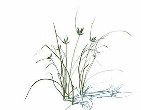 Grass Tropilo 3D