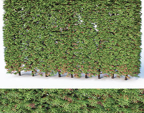 Thuya occidentalis Nr5- hedge H200cm 3D model
