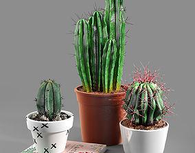 3D model Set of three cactuses 02