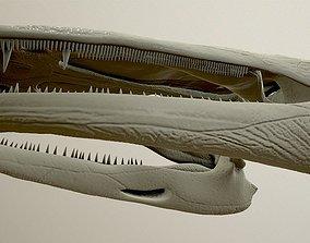 3D Cyclotosaurus intermedius skull