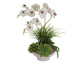 3D asset Orchid In Pot