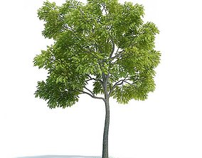 3D model Green Leaf Tree green