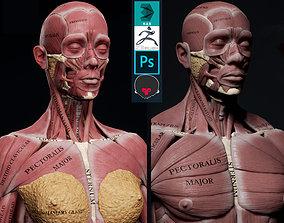 Female Anatomy Kit and Human Anatomy Kit 3D model