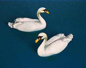 White Swan 3D