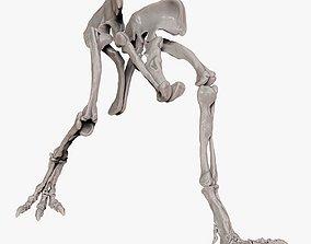 3D model Spinosaurus 2020 version Hip Leg Set Skeletons