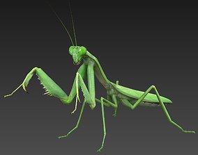 mantis insect 3D asset