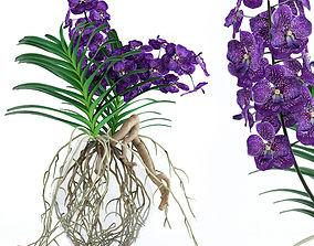 Vanda orchids 3D model