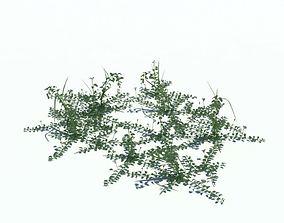 Field Bindweed Plant 3D