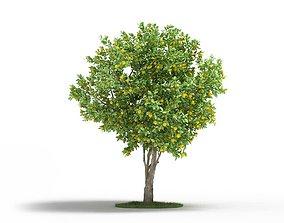3D Mature Naval Orange Tree