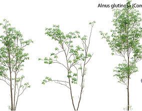 3D model Alnus glutinosa - Common alder