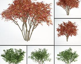 3D Juneberry Amelanchier canadensis set