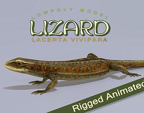 3D asset Lizard Lacerta Vivipara