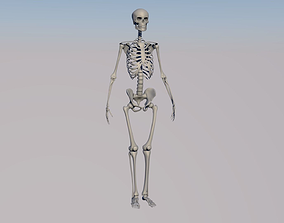 character 3D HighPoly Skeleton