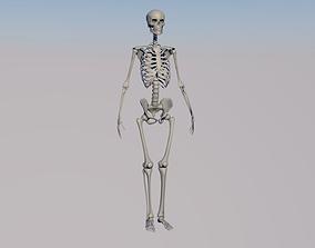 Free Skeleton 3D Models | CGTrader