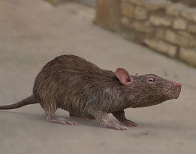rat rigged fur 3D