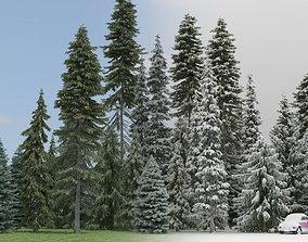 Summer Winter Fir Trees 3D