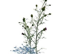 3D Potted Cirsium Vulgare Plant