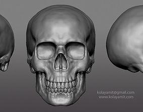 3D model skull ZTL cranium