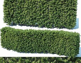 3D Taxus Baccata Nr2 - modular hedge H80cm