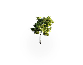 3D model Low Poly Tree Stylish
