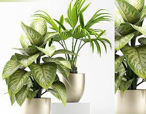 Plants 91 3D model
