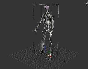 3D model Nervous System