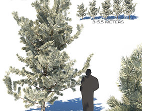 3D Winter young pines