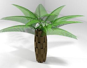 3D Palm Tree - Oil