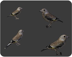 bird golden finch 3D model