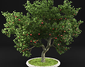 Apple tree vegetation 3D model