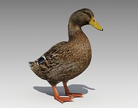 Mallard Duck Female 3D model