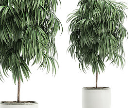 Decorative tree in a white flowerpot for interior 3D 1