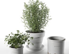 Rosemary and Parsley in Pots 3D model