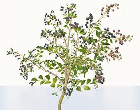 3D model blue berry bushes