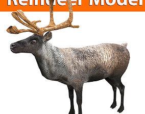 Reindeer 3d model game ready VR / AR ready