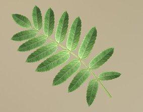 Rowan Berries Leaf Low-Poly 3D model VR / AR ready