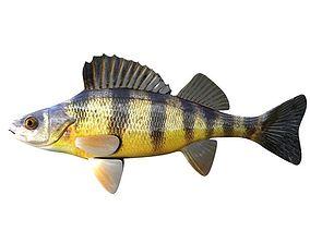 3D Yellow Perch Fish Perca Flavescens
