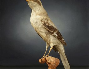 3D asset low-poly photogrammetry Bird Photorealistic Posed