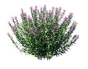 3D asset Cuphea plant