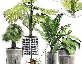 3D Potted plants Set 5