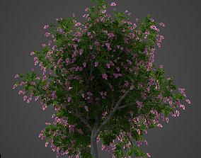 2021 PBR Giant Crape Myrtle Collection 3D model