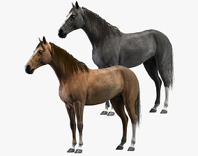3D model Horses Rigged