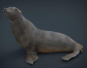 3D model Realitic Seal